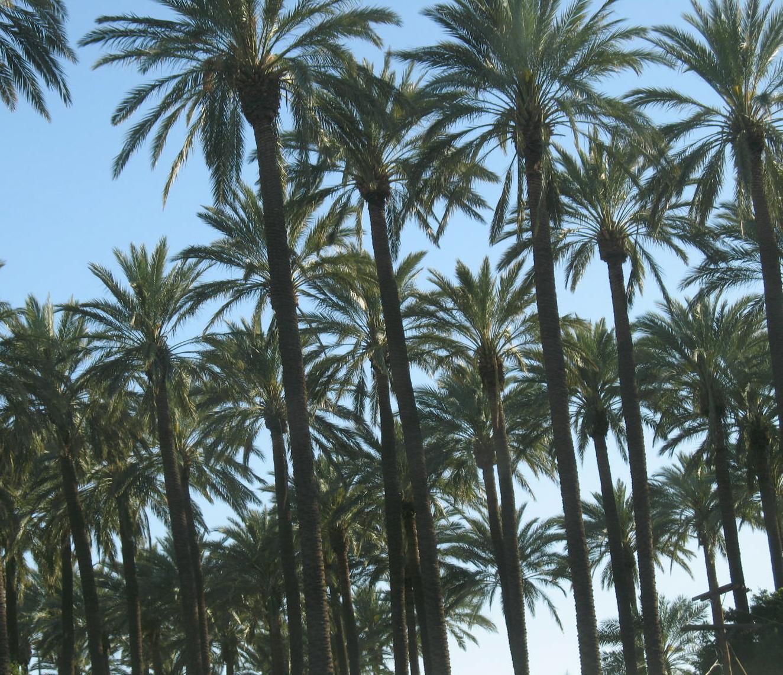 Palm Tree Header Tumblr in October 2017 - VM.info
